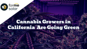 Cannabis Growers in California Are Going Green